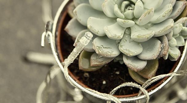 Accesorios y alambres para floristas